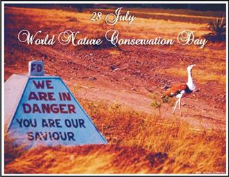Great Indian Bustard - BNHS